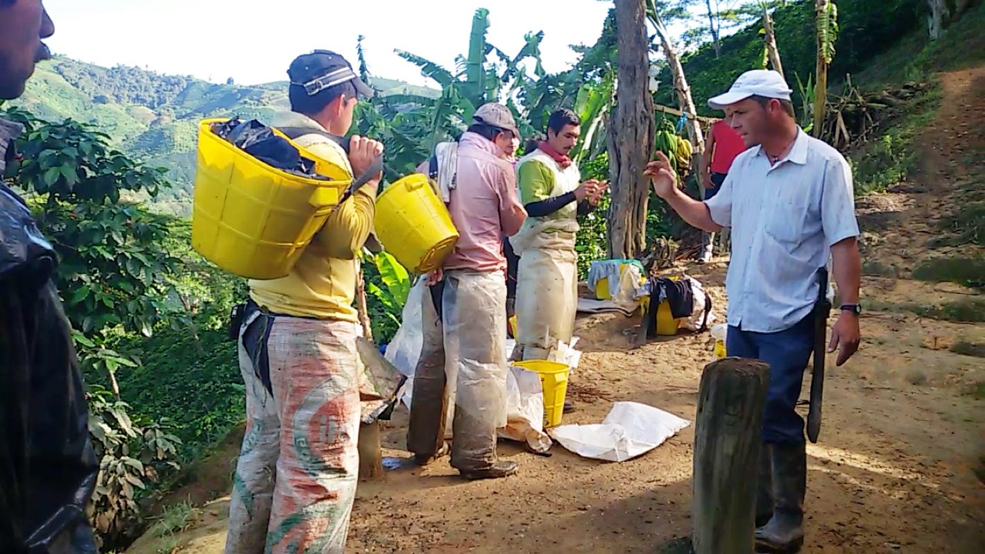 Farmer instructing pickers