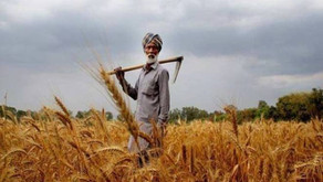 Agri exports up 18% to $10 billion in H1