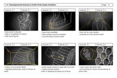 Preliminary Storyboard One: Enamal Hypoplasia Animation