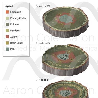 Drydown Stages of Ponderosa Pine Seedlings