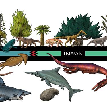 Evolutionary Timeline