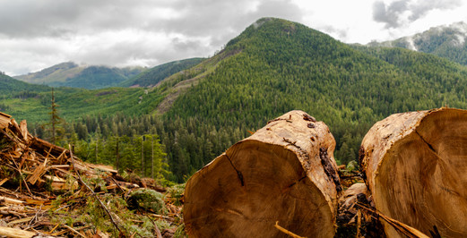Carmannah Walbran Logging 7