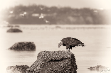 Herring-roe Fishery 7