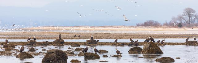 Herring-roe Fishery 8