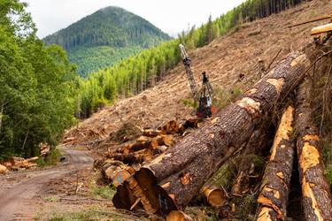 Carmannah Walbran Logging 1