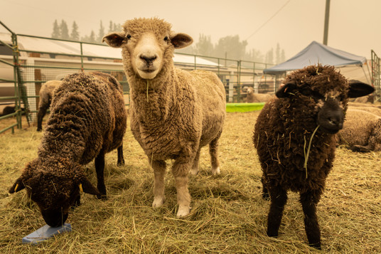 Pets and Livestock 1
