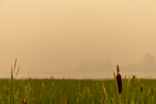 The Haze of Burns Lake