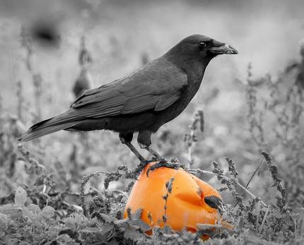 Samhain Collection 30