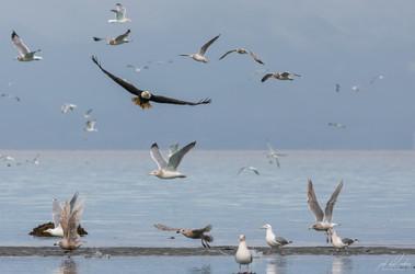 Herring-roe Fishery 10