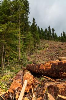 Carmannah Walbran Logging 6