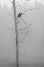 Raven Smoke