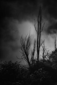 Samhain Collection 17