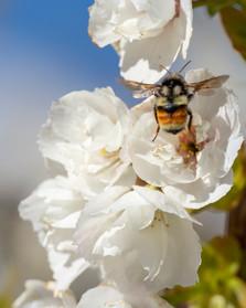April 14, 2021 - Bumble Bee 2.jpg