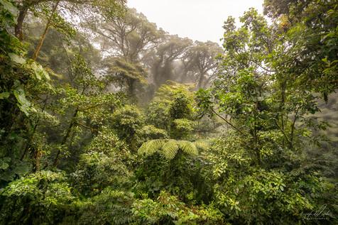 Selvatura Cloud Forest