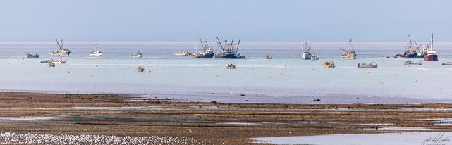 Herring-roe Fishery 4