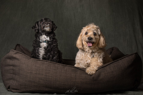Jake and Bailey 2