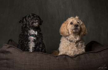 Jake and Bailey 1