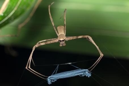 Australian Invertebrates