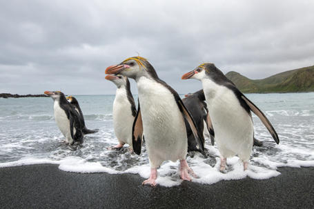Sub-Antarctic Realm