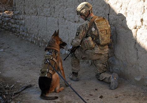 Warriot Dog.JPG