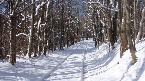 Road near cabins