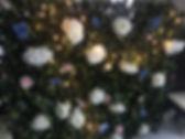 IVY WALL.jpg
