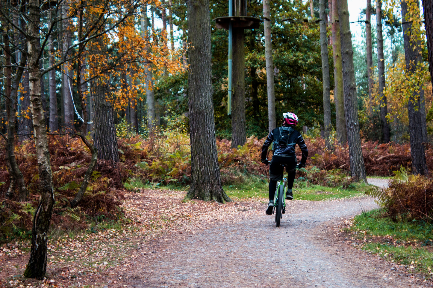 Cannock Chase Forest, Cycle Routes