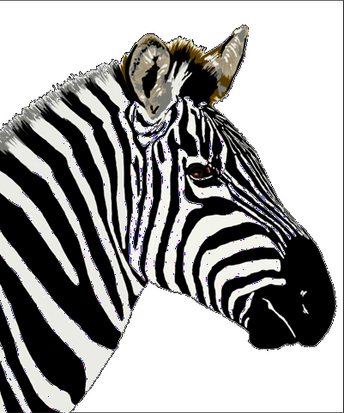 170312 Zebra 1d2_edited.png