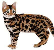 170224 Bengal Cat 1e_edited.png