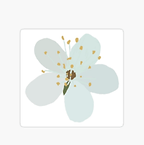 White-Blossom-Design.png