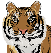 170227 Tiger 1c_edited.png