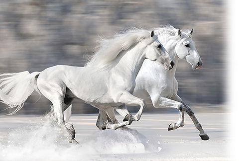 whitehorses_660.jpg