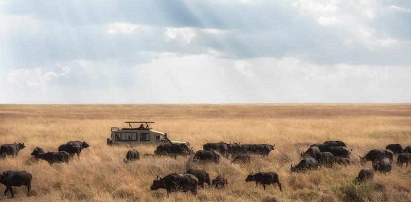 Tanzania's Serengeti in pictures