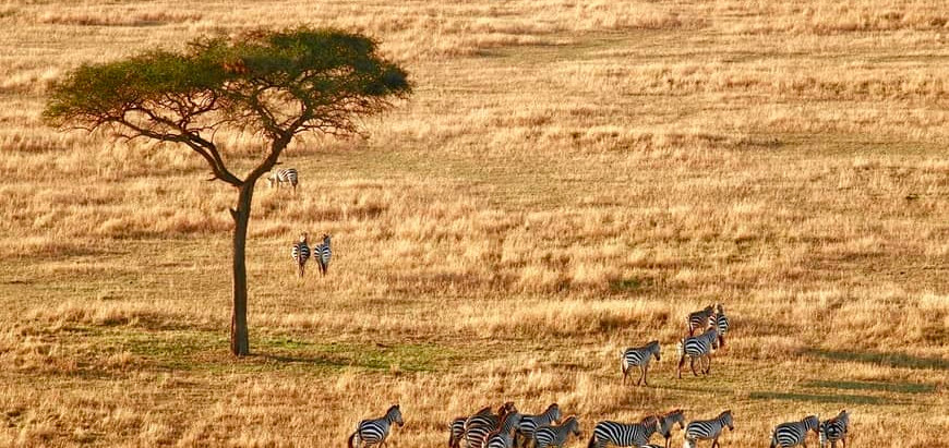 How to choose a safari destination in Southern Africa