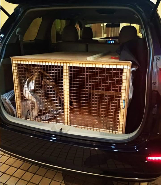 Airport pet taxi, relocating to Singapore