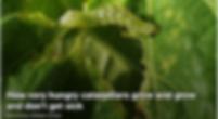 Screen Shot 2020-06-13 at 4.26.18 PM.png