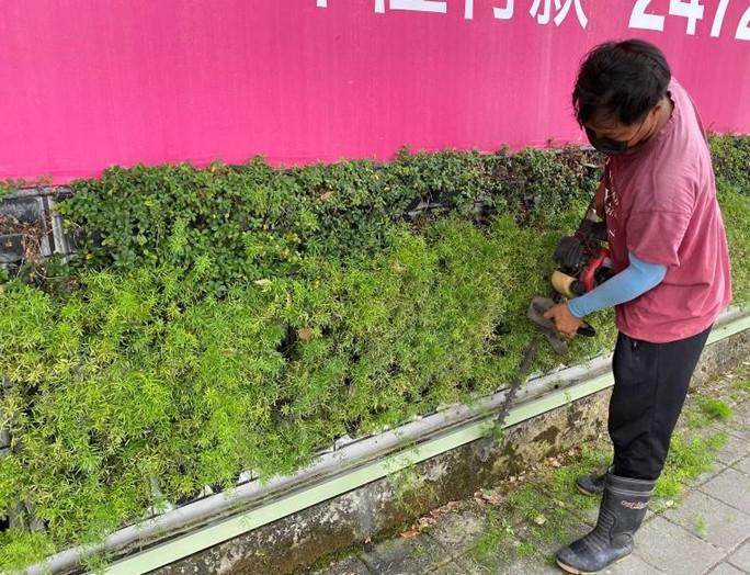 工區周邊圍籬植栽修剪