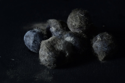 Once upon a time...blueberries