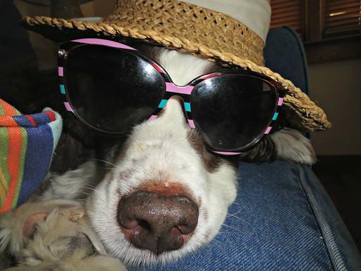 How to Choose a Pet-Friendly Resort in Sarasota, Florida