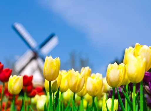 A Dutch Treat: Top 5 Floral Events in Holland