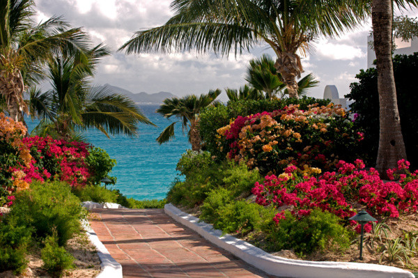 Tropical plants and flowers overlooking the sea