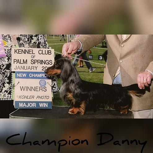 Sire-Danny (retired) black and tan dapple