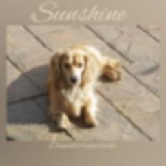 sunshine 12102019.jpg