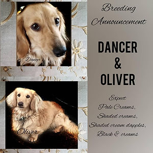 revised Dancer Oliver 2021.jpg