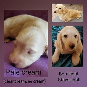 pale cream.jpg