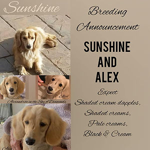 revised sunshine and alex 2021.jpg