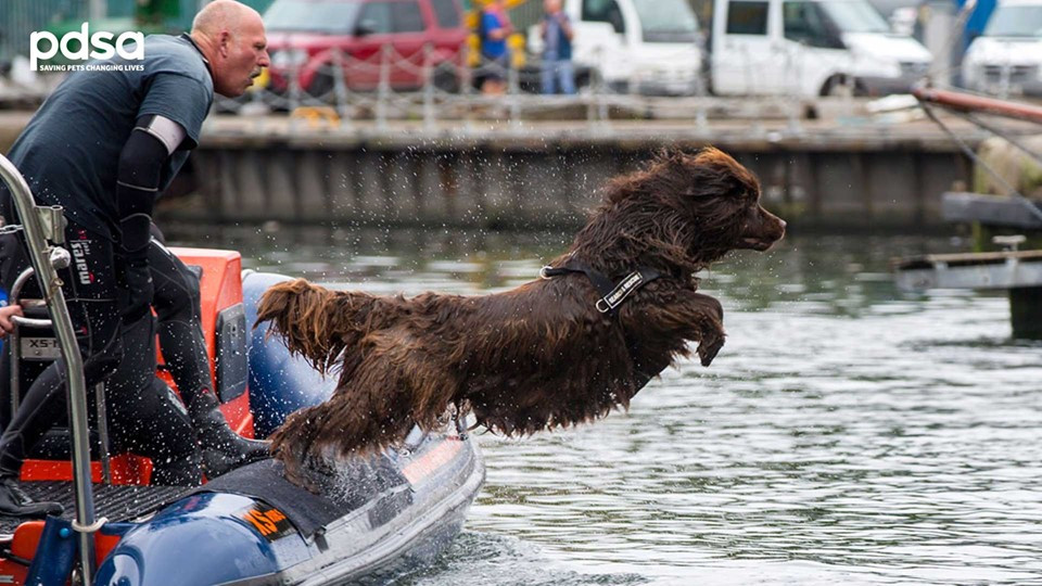 Dog jumping onto Portishead Marina