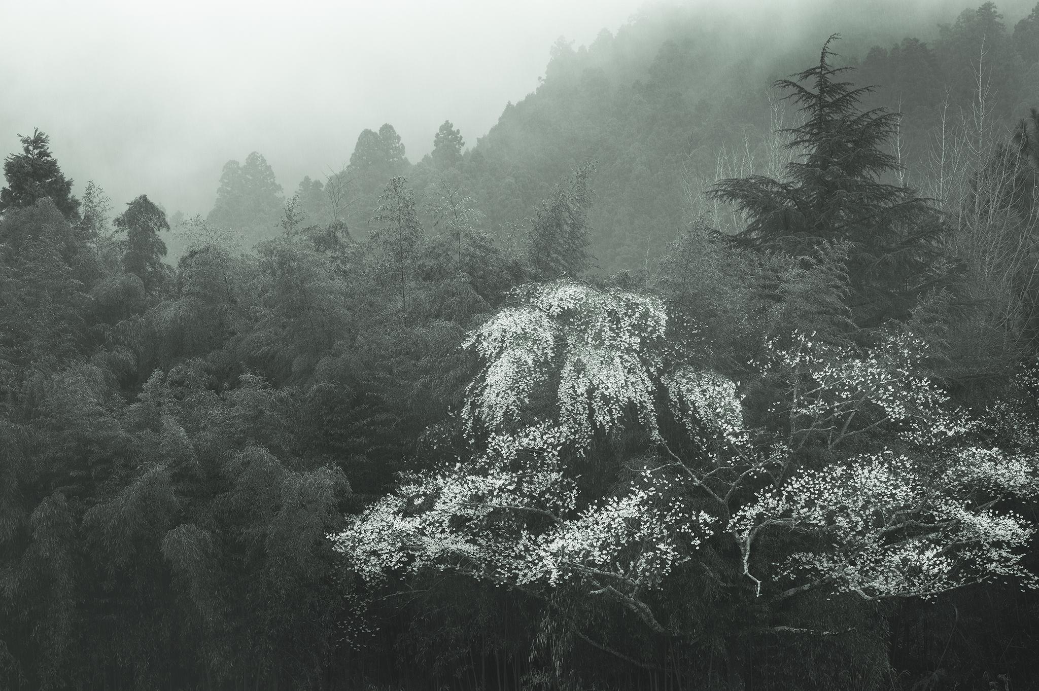 Nippon-08