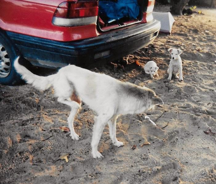 Puerto Rican strays hung out at our camp on the beach