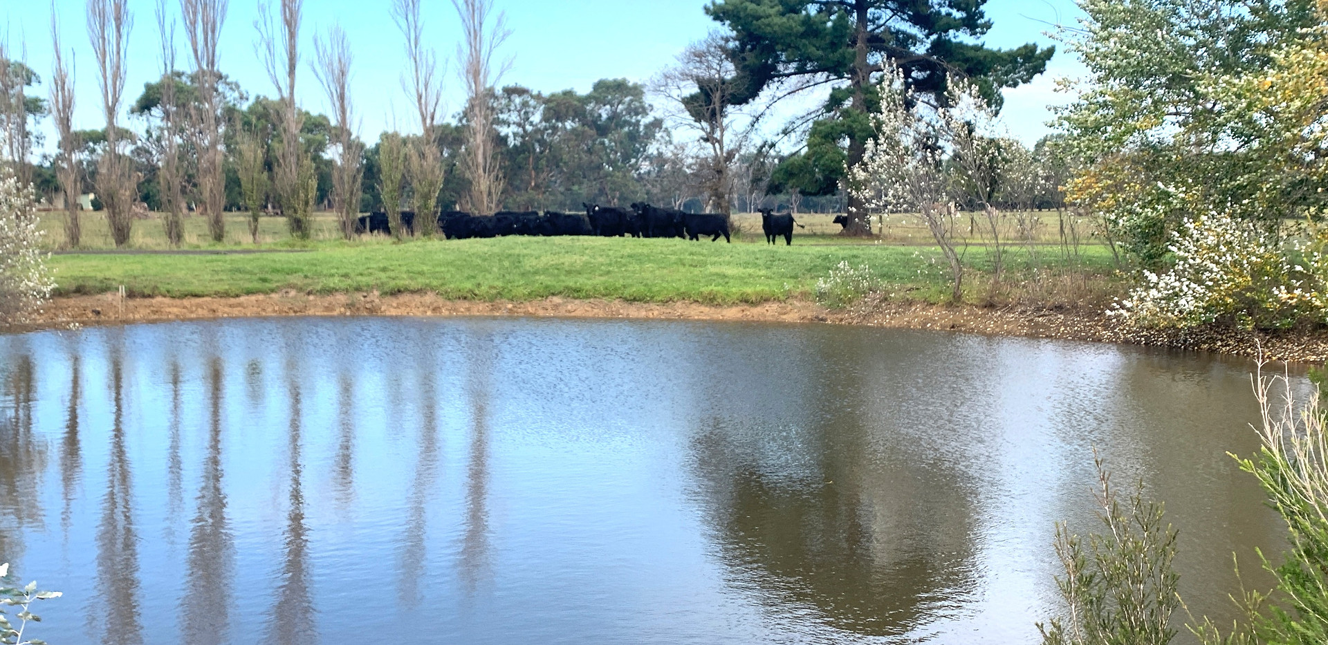 The farm dam, fenced away from the house.